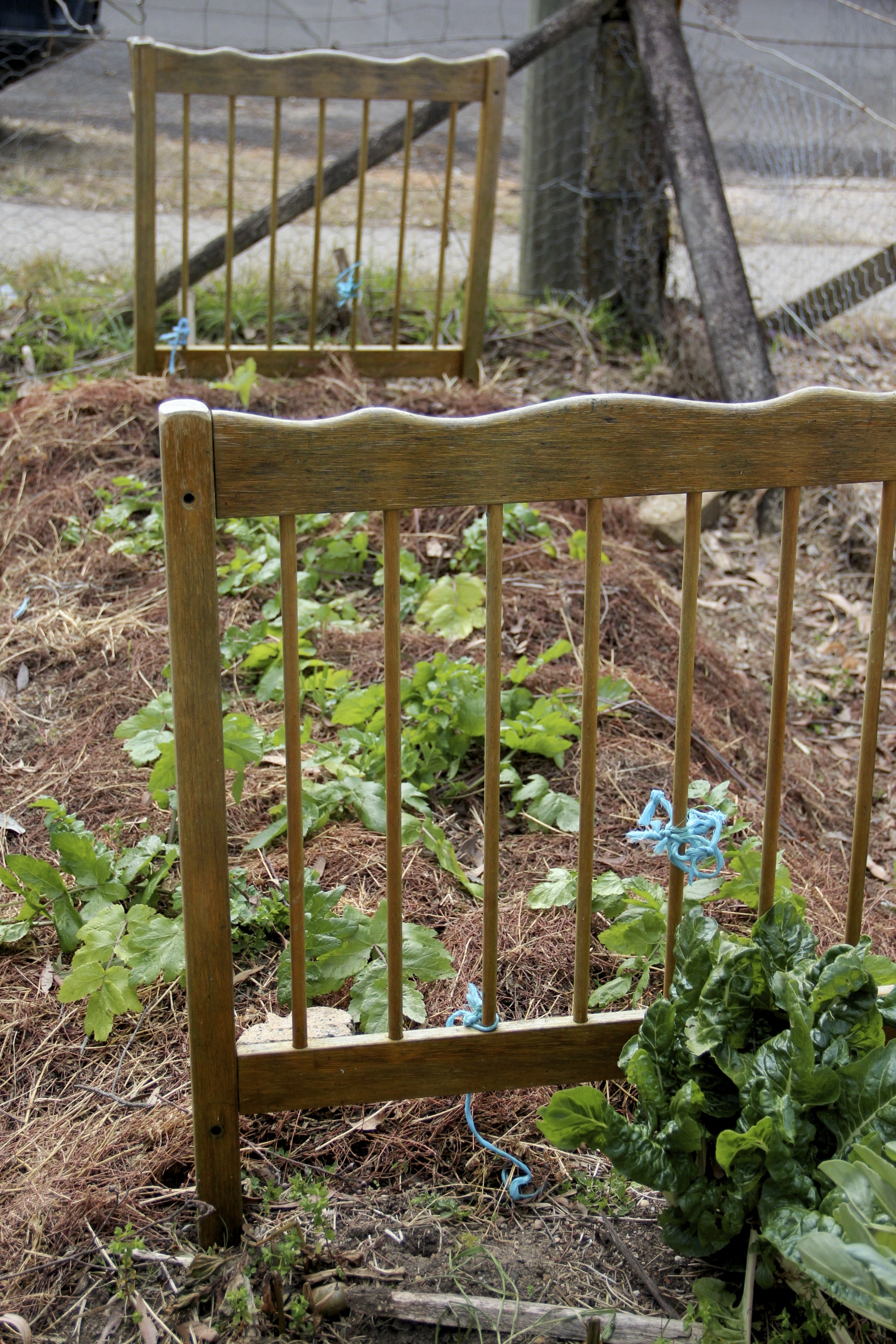 GARDEN TIPS FROM LOCAL GROWERS | The Blue Mountains Food Co-op